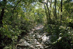 Bois de Paiolive