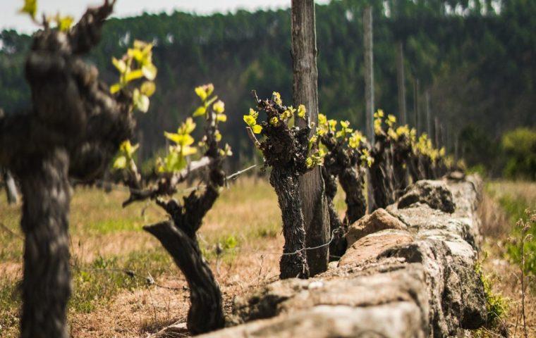 sentier des vignes rosieres