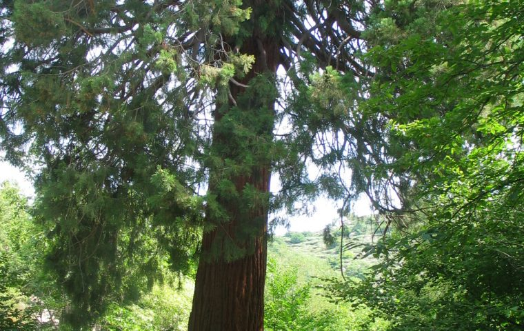 sequoia couderc sablieres