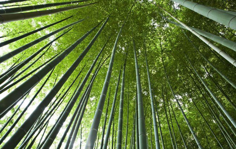 Bambouseraie en Cevennes