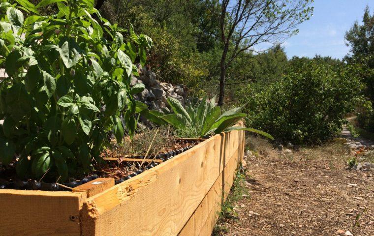 recolte plantes